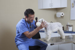 Pet Eye Checkup